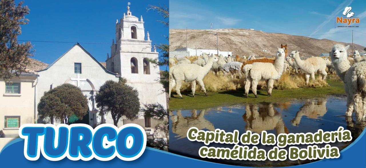 Lee más sobre el artículo Turco, vanguardia mundial en la producción de camélidos